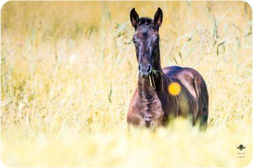 Pferde & Ponies